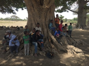 Kids around the fig tree