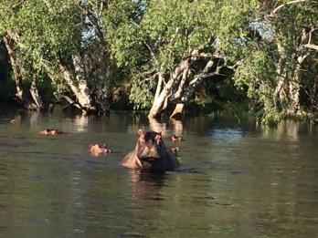 Cruising the Mighty Zambezi river